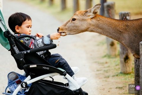 A little boy in a stroller feeds a deer in this photo by a Hangzhou City family photojournalist.