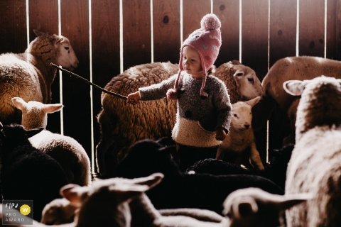A small girl in a barn shepherding the sheep | Florianopolis family photography