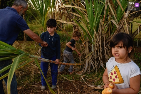 Ribeirao Preto Documentary Family Photography | children harvest sugar cane