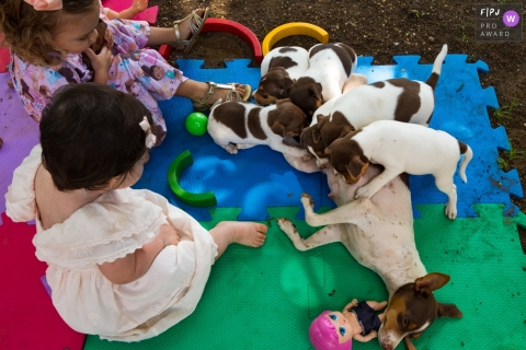 Moment driven Cuiabá family photojournalism image showing the dog family is growing