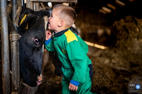 Zuid Holland day in the life photography of a young man whispering to a cow