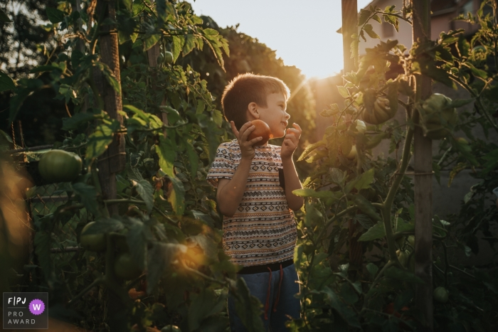 A little boy smiles while he picks a ripe tomato from the garden in this Family Photojournalist Association awarded photo by a Cluj documentary family photographer.