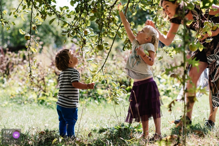 A mother helps her son and daughter pick apples in this family picture by a Gelderland, Netherlands photographer.