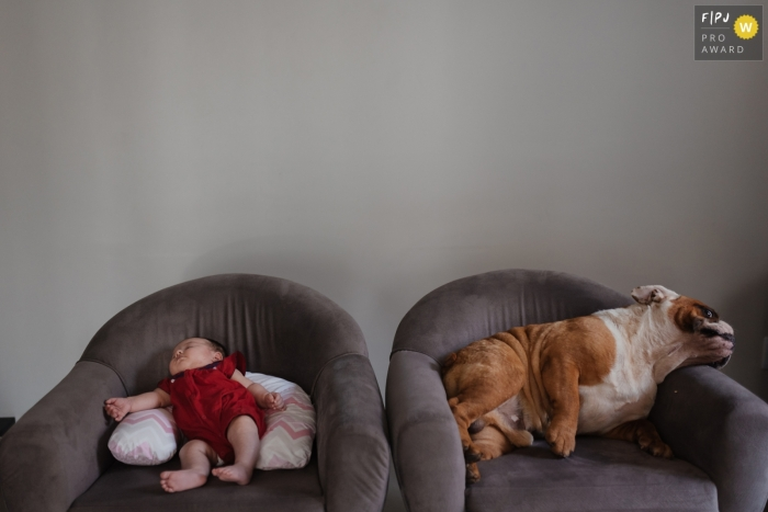 A dog and baby both sleep next to each other on two separate chairs in this photo by a Recife award-winning family photographer.