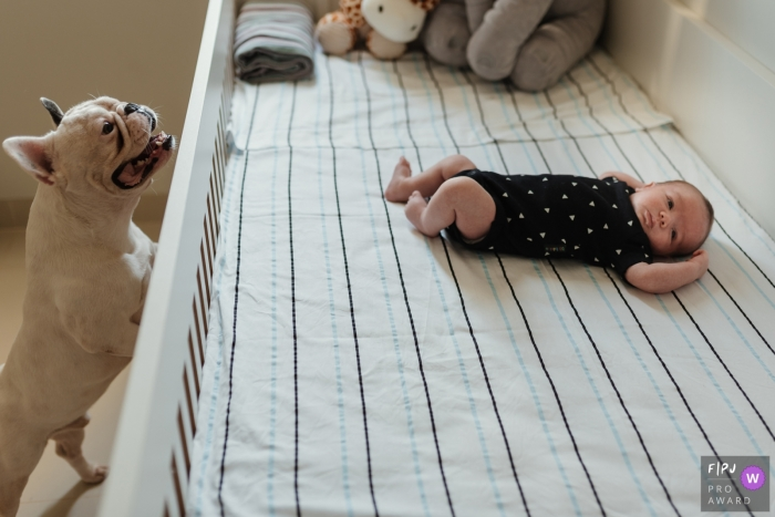 A dog tries to get a peek at the baby laying in the crib in this photograph created by a Recife family photojournalist.