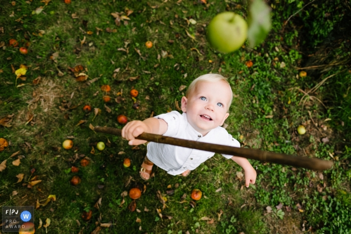 A young boy tries to knock down an apple with a stick in this photo by an East Flanders family photojournalist.