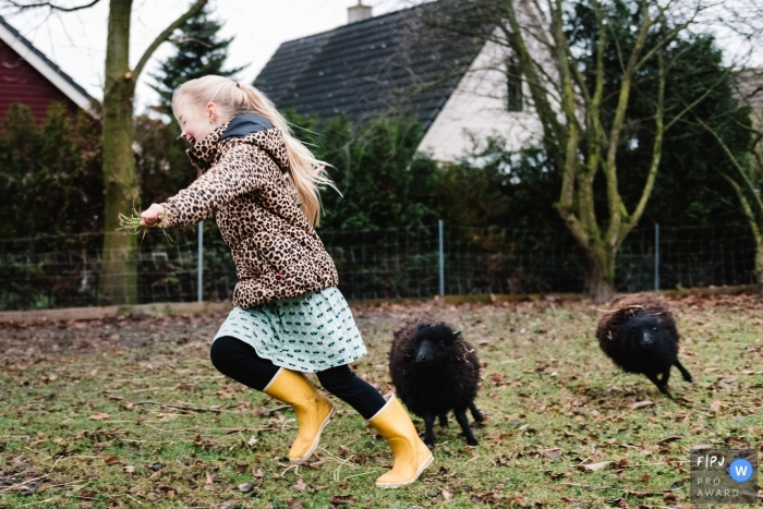 A girl runs as she is chased by two black sheep in this photo by a Gelderland family photographer.