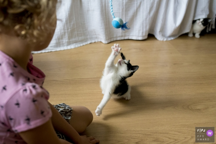 A little girl watches a kitten play with a toy in this Family Photojournalist Association awarded photo by a Holland documentary family photographer.