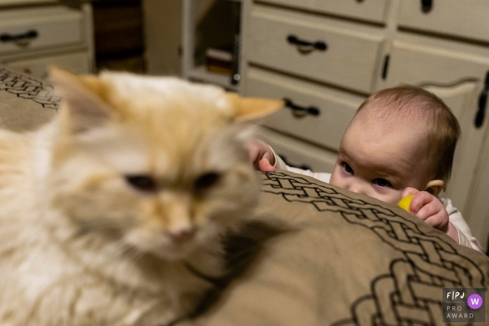 Ontario documentary family photographer captured this photo of a baby suspiciously eyeing the family cat