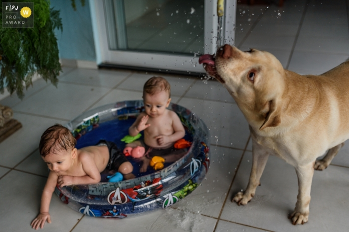 A dog drinks from a hose while two little boys play in a kiddie pool in this family picture by a Recife photographer.