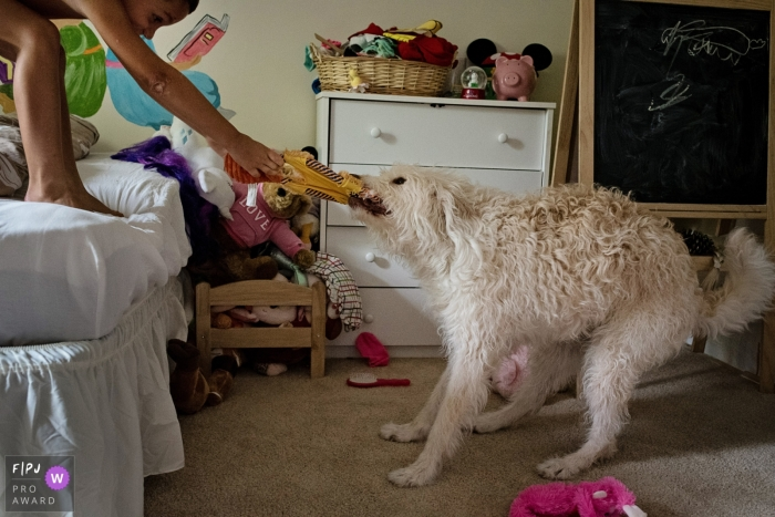 A child tries to take a toy back from the dog in this photo by a Key West, FL award-winning family photographer.