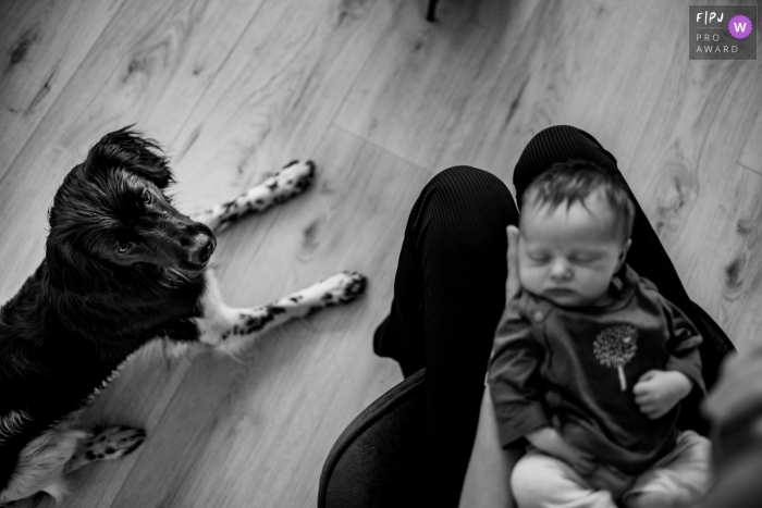 Groningen, Netherlands family photography showing dog checking out the new baby.