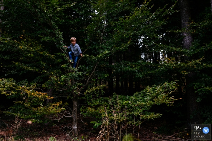 Young boy climbs a tree and looks out | Slovenia Family Photographer