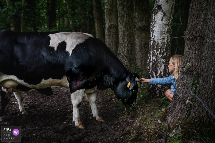 Belgium Family photo of a girl reaching out and petting a cow