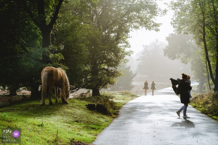 NL nature documentary-style family photo shoot in Gelderland with a meeting of wild horses while hiking with baby