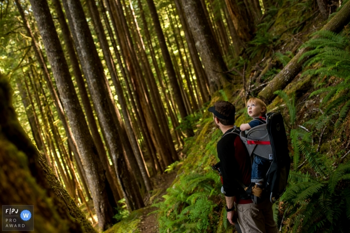 Washington Family Photographer captures images of kid looking up at the tall trees while on a hike