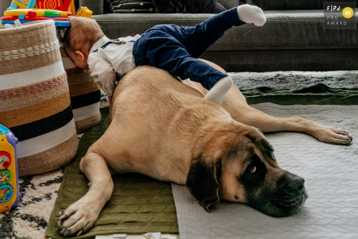Moment driven Chicago family photojournalism image of a toddler falling over a dog laying on the floor